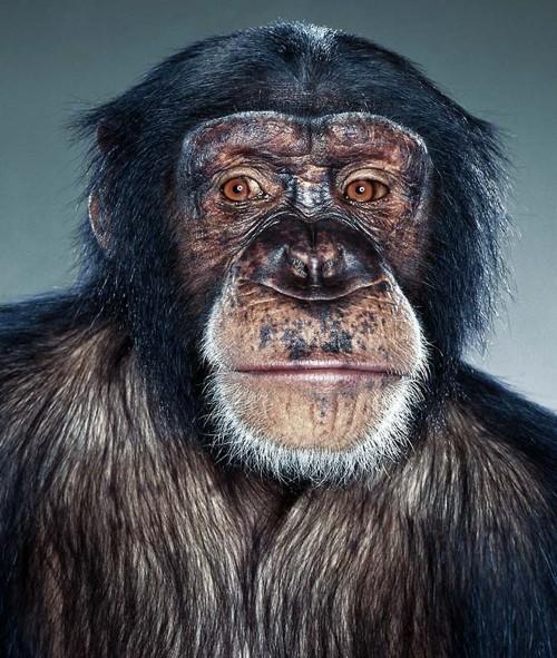 Monkeys - портретные съемки. Хоть завтра на паспорт... Фотограф Jill Greenberg