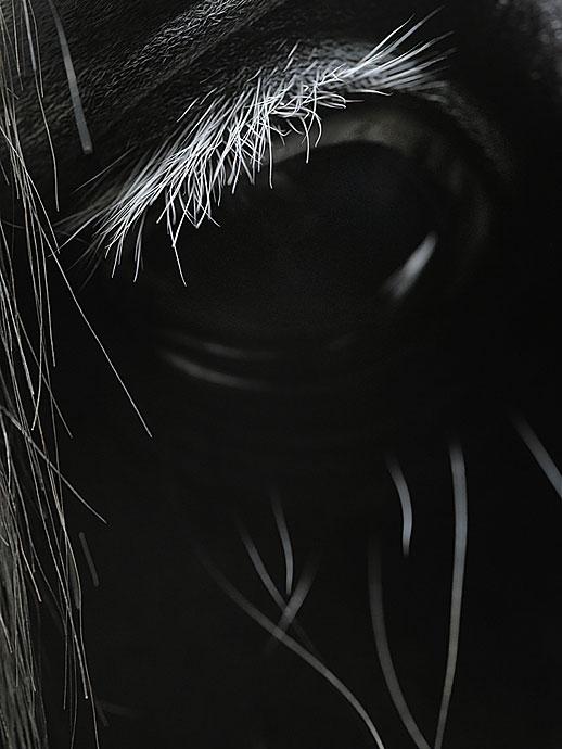 Работы призера международных конкурсов, фотографа дикой природы Tim Flach (66 фото - 7.53Mb)