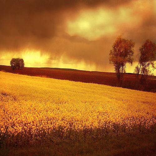 Портфолио фотографа Bogna Kuczerawy (86 фото - 3.13Mb)
