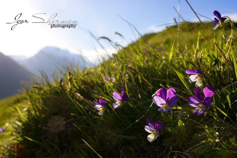 Природа Норвегии. Игорь Шерман