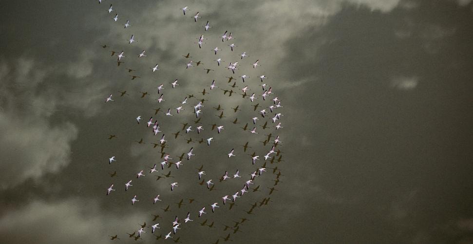 Земля с высоты птичьего полета... Фотограф Art Wolfe (21фото - 1.73Mb)